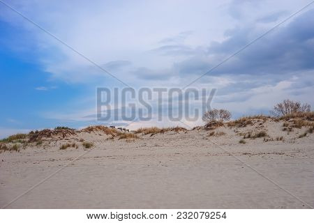 Baltiysk, Russia-may 15, 2016: Sand Dunes With Growing Trees On The Shore Of The Baltic Sea Against
