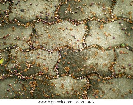 Concrete Floor of Nature