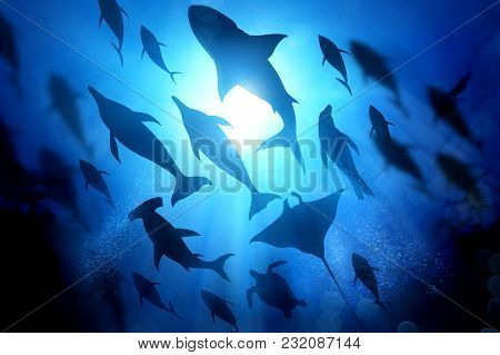 A Variety Of Marine And Ocean Life Silhouettes Under The Waves Including Salt Water Dolphins, Sharks