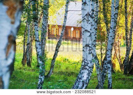 House Birch Forest Summer Evening Satellite Antenna Selective Focus
