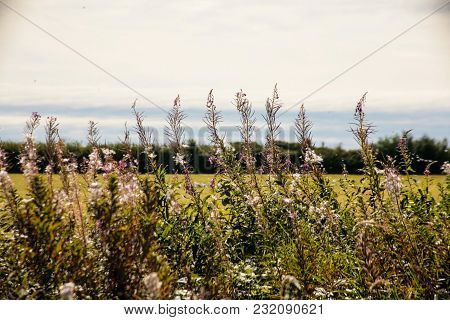 Image Of Meadow With Reed Foreground On Summer Day