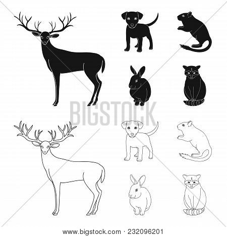 Puppy, Rodent, Rabbit And Other Animal Species.animals Set Collection Icons In Black, Outline Style