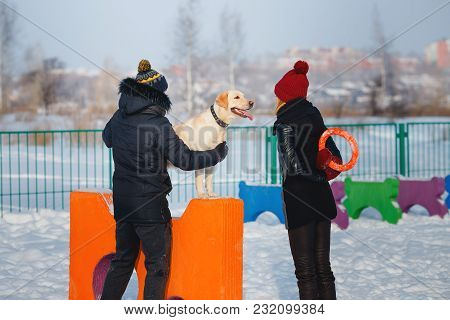 Man And Young Woman Are Training Labrador Dog In Winter On Sports Field For Dogs. Jumping Through Ob