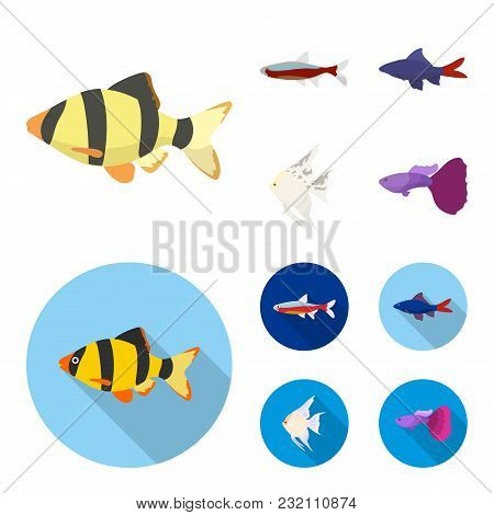 Angelfish, Common, Barbus, Neon.fish Set Collection Icons In Cartoon, Flat Style Vector Symbol Stock