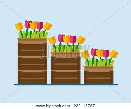 Flowers In Boxes. Flowers In Boxes In Flat Style. Flowers In The Boxes In The Warehouse. Flowers In