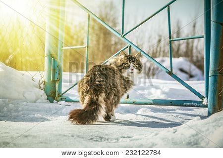 A Cat In A Winter Village In The Snow.