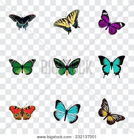 Set Of Butterfly Realistic Symbols With Beauty Fly, Tiger Swallowtail, Precis Almana And Other Icons