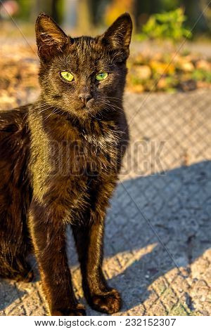 Brown Stray Cat With Green Expressive Eyes Is Sitting In The Sun, Close-up. The Background Is Blurre