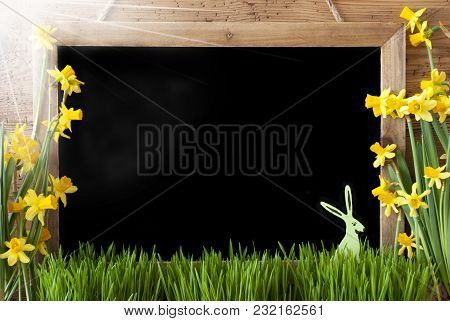 Blackboard With Copy Space For Advertisement. Sunny Spring Flowers Nacissus Or Daffodil With Grass A