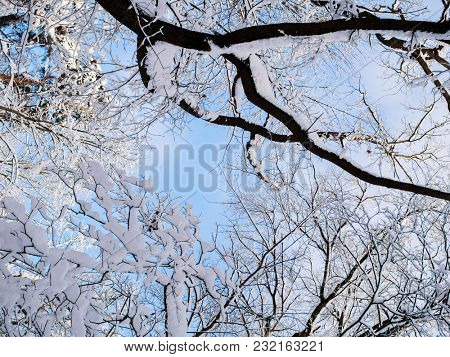 Picture of snowy trees in forest and blue sky