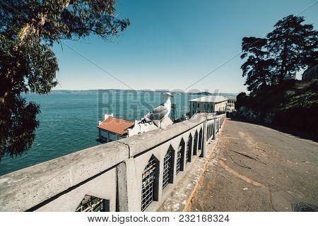 Seagull bird on scenic promenade street at Alkatraz island in San Francisco