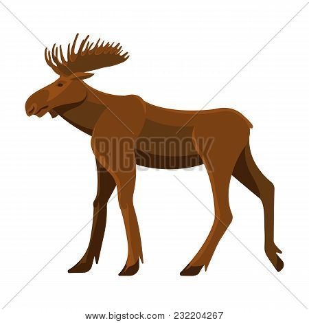 Wild Adult Moose With Big Branchy Horns And Strong Legs. Forest Herbivorous Animal With Thick Brown