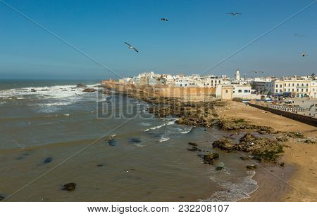Aerial view of seagulls over Essaouira old city on Atlantic coast, Morocco