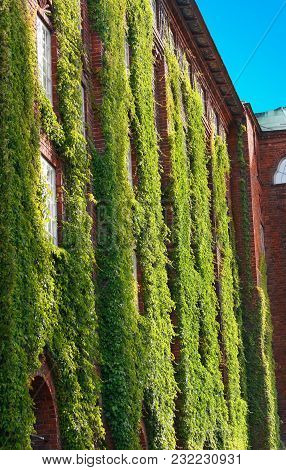 Red Brick Building With Windows Covered In Ivy On The Wall