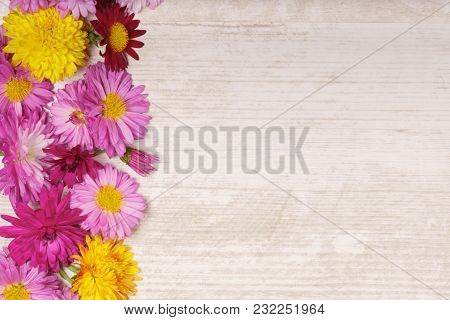 Left Frame Border Of Chrysanthemum Flowers On Light Wooden Background From Above.
