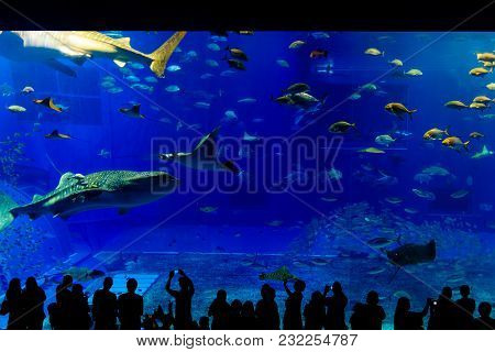 View Of Sea Life Park In Okinawa, Japan