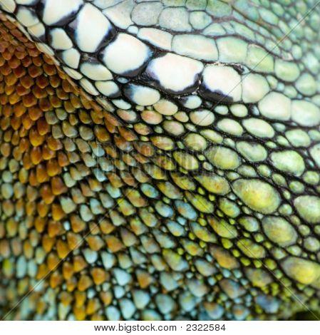 Piel de reptil