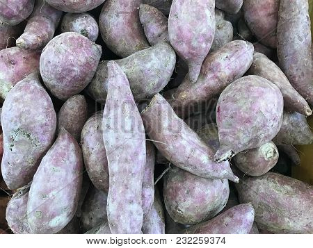 Pile Of Fresh Sweet Yam, Agriculture And Food Concept