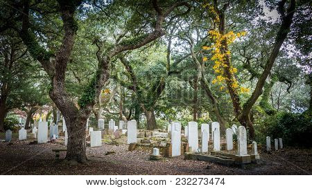 November 24, 2017: Beaufort Nc Usa- Trees And Ivy In A Cemetary With Headstones