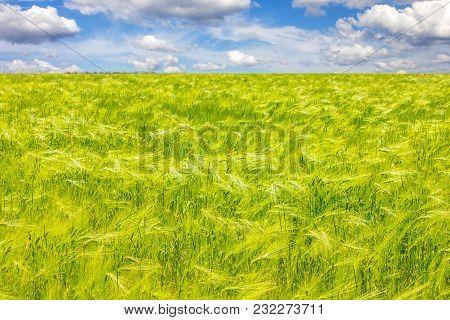 Wheat, Field, Sky, Nature, Crop, Landscape, Summer, Farm, Yellow, Background, Beautiful, Blue, Healt