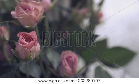 Pink Roses Bunch As A Wedding Background For Design Natural Background Tender Pink Rose Buds In A Bo