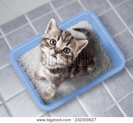 Cat top view sitting in litter box on bathroom floor
