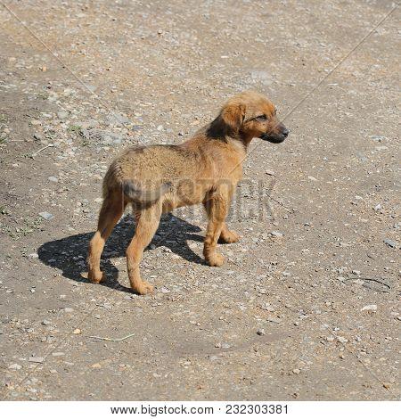 Small Stray Dog Outside At Sunny Day