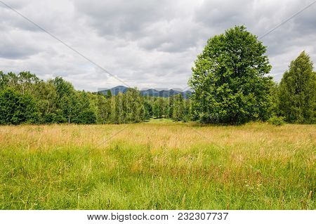 Beautiful Green Landscape With Meadow, Trees And Sky