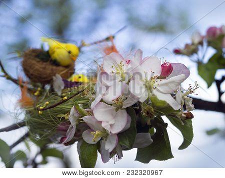 Bird's Nest On Branches
