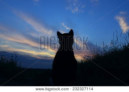 Silhouette Of Cat At Beautiful Sunset. Cute Cat On The Road,sunset Background,cat Looking. Stray Kit