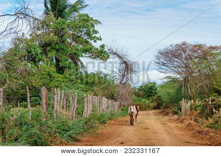 Two Horses Walking  On A Dirt Road In A Rural Tropical Area