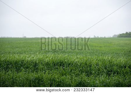 Green Meadow Under Blue Sky With Clouds Green Field Bright Green Young Grass Wheat Barley Spring Fie