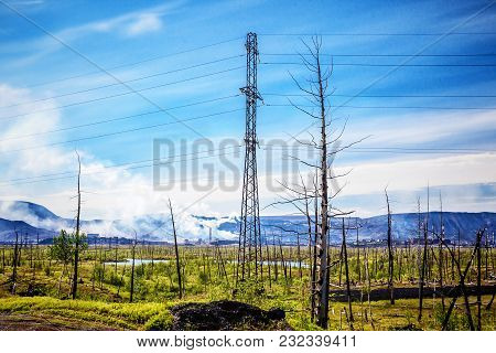 Dead Trees In The Forest Around A Norilsk, North Russia