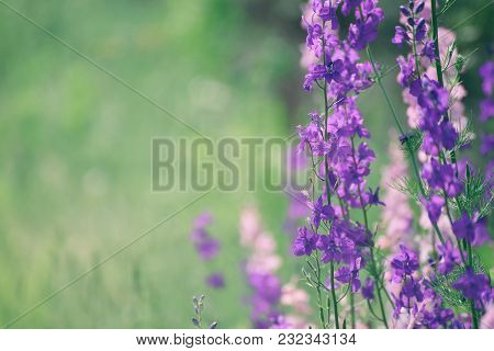 Background From Tender Soft Violet Blue Beautiful Flowers, Floral Vintage Background