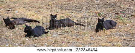 Group of black stray cats resting on lawn