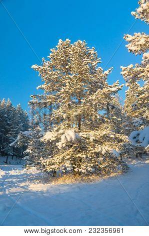 December Frost Wintry Landscape