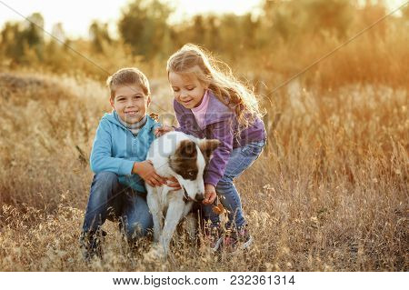 Family Time. Brother And Sister Walk With A Pet. Young Dog Breed Siberian Husky. Golden Meadow At Su