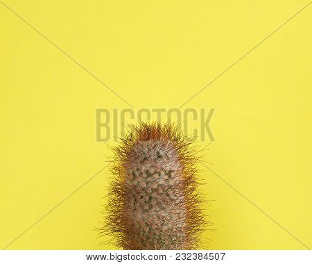 Cactus Fashion Design. Minimal Fashion Stillife. Trendy Bright Colors. Green Cactus On Yellow Backgr