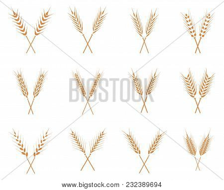 Vector Wheat Ears Icons Set. Ear And Organic Wheat, Bread Agriculture, Seed And Plant, Natural Eat.