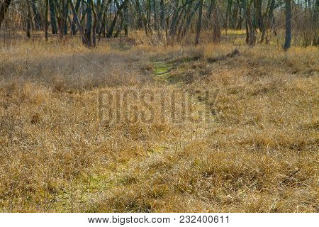 Image Of A Path In A Thicket Of An Abandoned Park