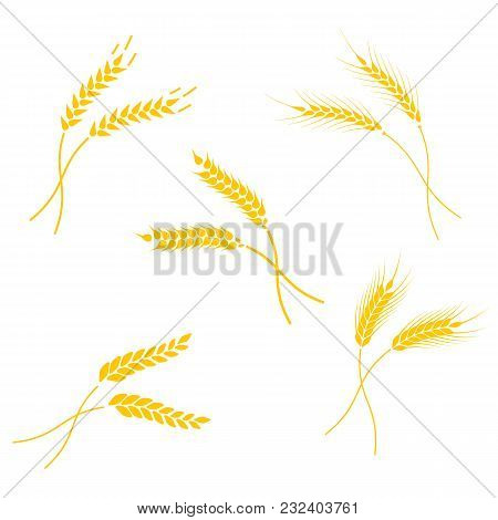 Concept For Organic Products Label, Harvest And Farming, Grain, Bakery, Healthy Food. Set Of Simple