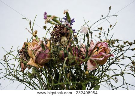 Withered Flower Bouquet With Dry Roses Close Up