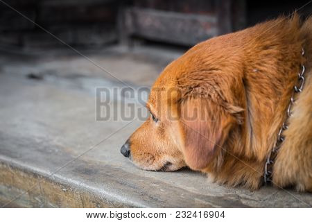 Dog Pet Depressive Disorder Sad Alone Lonely