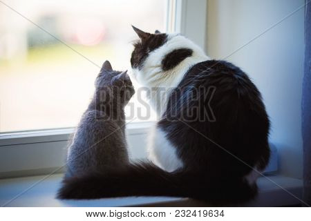Kitten And Adult Cat Sitting On The Window. Adult Male Reports His Experience To The Younger Generat