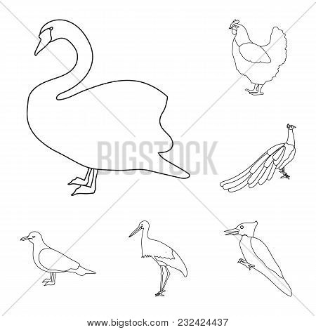 Types Of Birds Outline Icons In Set Collection For Design. Home And Wild Bird Vector Symbol Stock  I