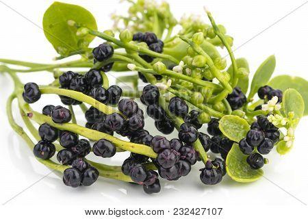 Malabar Spinach, Ceylon Spinach (scientific Name Is Basella Alba) On White