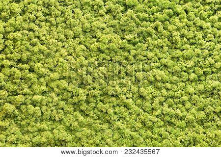 Artificial Green Moss Wall For Garden Decor. Moss Background Texture.