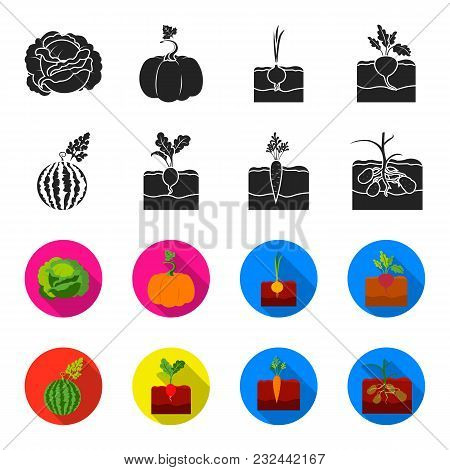Watermelon, Radish, Carrots, Potatoes. Plant Set Collection Icons In Black, Flet Style Vector Symbol