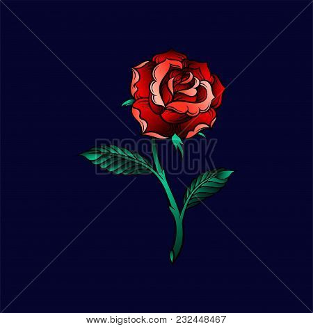 Beautiful Rose Flower In Red Colors, Floral Design Vector Illustration On A Dark Blue Background In