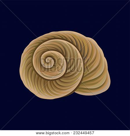 Spiral Snail House Or Shell, Empty Shell Of A Sea Mollusk Vector Illustration Isolated On A Dark Blu